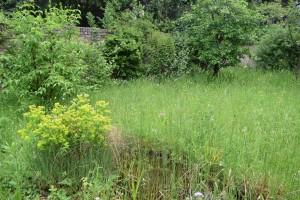 Naturgarten - Bild 10