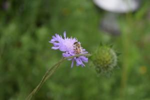 Naturgarten - Bild 14