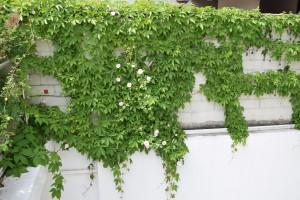 Naturgarten - Bild 15