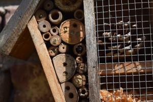 Insektenhaus mit Mauerbienen #3