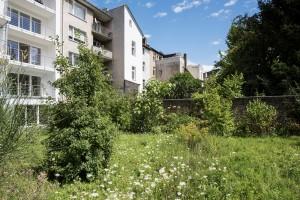 Naturgarten - Bild 5