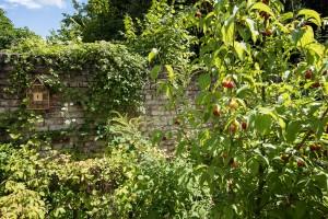 Naturgarten - Bild 8